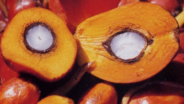 Pop Quiz: Which is Healthier – Palm Oil or Palm Kernel Oil?