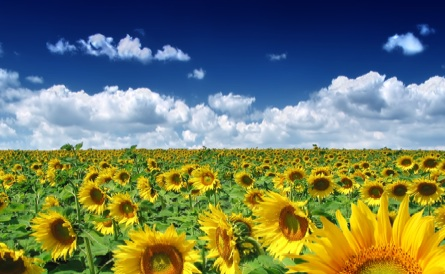 http://media.fooducate.com/blog/posts/Sunflowers.jpg