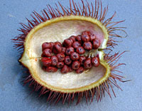 9 Things to Know About Annatto [Food Additive]
