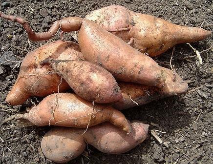 Five Tasty Sweet Potato Ideas [Readers Write]
