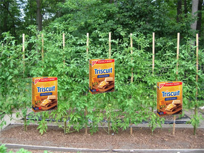 Grow a Triscuit Tree in Your Backyard