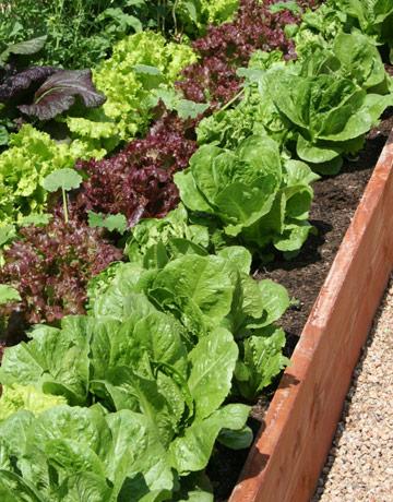 Backyard Veggies for Fun and Profit (The Farmer's Garden Story)