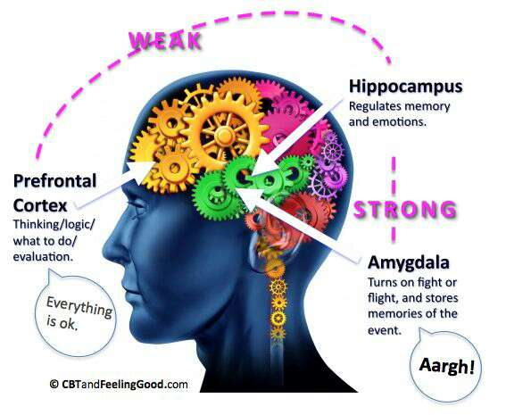 Understanding The Stress Response Chronic Activation Of This Survival Mechanism Impairs Health
