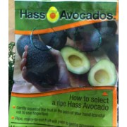 avocados case analysis Market chain analysis of agro-forestry products: the case of fruit at tembaro district, kembata tembaro zone south ethiopia  avocado, banana and mango.